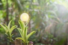 L'écologie et les ampoules saveing d'énergie ont mené avec électrique naturel photographie stock libre de droits