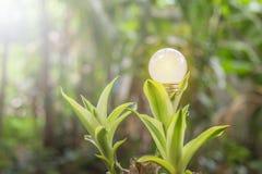 L'écologie et les ampoules saveing d'énergie ont mené avec électrique naturel images libres de droits