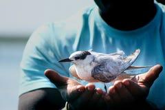 L'économie de faune fixent dedans des mains Photo libre de droits