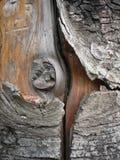 L'écorce d'arbre Photo libre de droits