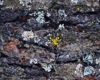 L'écorce d'un arbre avec de la mousse colorée là-dessus Fond Macro Photo libre de droits