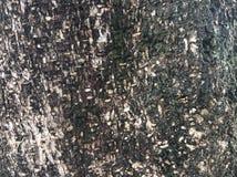 L'écorce de l'arbre est noire photos libres de droits