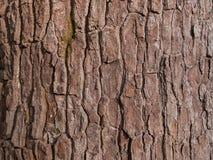 L'écorce du bois Photo libre de droits