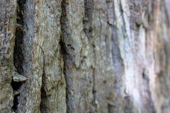 L'écorce du vieil arbre Fond étonnant photographie stock libre de droits