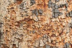 L'écorce rayée L'utilisation en tant que variété en bois modelée par fond, varie Image libre de droits