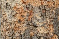 L'écorce rayée L'utilisation en tant que variété en bois modelée par fond, varie Photo libre de droits
