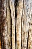 L'écorce rugueuse et superficielle par les agents d'un arbre de cèdre photo stock
