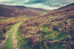 L'écossais encadre le paysage rural images stock