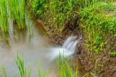 L'écoulement d'eau au gisement de riz Photographie stock libre de droits