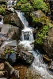 L'écoulement d'eau dans la jungle Photos stock