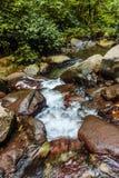 L'écoulement d'eau dans la jungle Images libres de droits