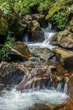 L'écoulement d'eau dans la jungle photographie stock
