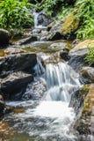 L'écoulement d'eau dans la jungle image stock