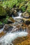 L'écoulement d'eau dans la jungle photos libres de droits