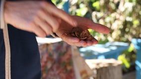 L'écrou mûr de noix d'homme nettoie le regard clips vidéos