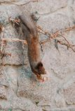 L'écureuil accroche à l'envers sur une barrière et le ronge sur des biscuits Photo stock
