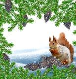L'écureuil dans les bois d'hiver Photos stock