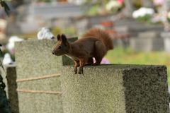 L'écureuil monte l'arbre et l'herbe Images libres de droits