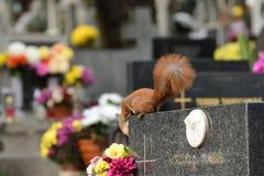 L'écureuil monte l'arbre et l'herbe Images stock