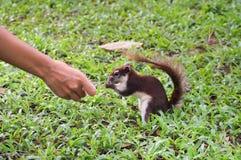 L'écureuil remercie les personnes après a obtenu un aliment Photographie stock