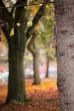 L'écureuil s'élève sur un arbre en automne Images stock