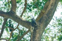 L'écureuil sur l'arbre est un petit mammifère photo stock