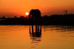 L'éléphant africain et l'ombre silhouettés se sont reflétés dans l'eau Photo stock