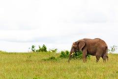 L'éléphant au Kenya Photos libres de droits