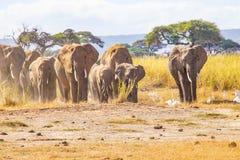 L'éléphant a entendu repéré dans la région sauvage photo stock