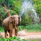 L'éléphant font le jet d'eau - douche de nature Photo libre de droits