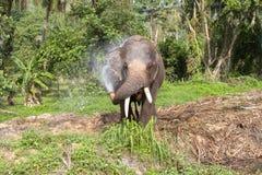 L'éléphant font le jet d'eau - douche thailand Photos libres de droits