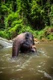 L'éléphant se repose en cascade à écriture ligne par ligne, fleuve Photo libre de droits