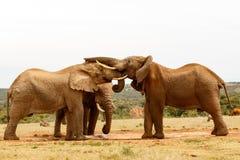 L'éléphant se tenant avec son tronc sur ses amis se dirigent Photographie stock libre de droits