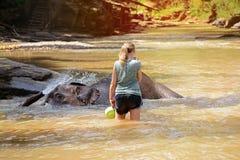 L'éléphant thaïlandais était prennent un bain avec le conducteur d'éléphant de mahout, gardien d'éléphant dans le camp d'éléphant photos stock