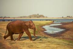 L'éléphant va à l'arrosage Image libre de droits