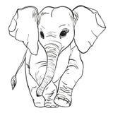 L'éléphant va Photos stock