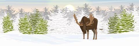 L'élan avec de grands klaxons marche par une vallée couverte de neige forêt impeccable sur l'horizon L'hiver illustration libre de droits