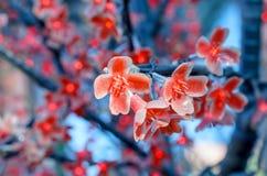 L'électro rouge - fleur. Photos libres de droits
