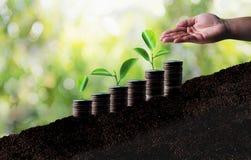 L'élevage de l'épargne invente, developm croissant d'affaires de graphique d'investissement Photos libres de droits