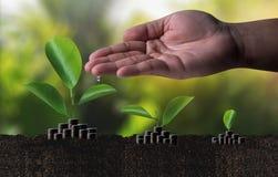 L'élevage de l'épargne invente le developm croissant d'affaires de graphique d'investissement Photographie stock