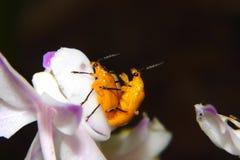 L'élevage des insectes Image libre de droits