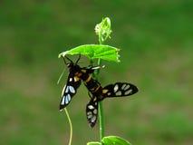 L'élevage des insectes - papillons dans le jardin Photos stock