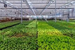 L'élevage des plantes ornementales, des arbustes fleurit pour faire du jardinage en serre chaude hydroponique moderne avec le sys Photographie stock libre de droits