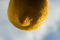 L'émancipation des fruits et légumes qui rêvent le ciel Photographie stock libre de droits
