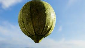 L'émancipation des fruits et légumes qui rêvent le ciel Photographie stock