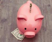 l'épargne de /money de Porcin-banque/concept de la croissance Images libres de droits