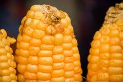 L'épi de maïs corrompu est macro images stock