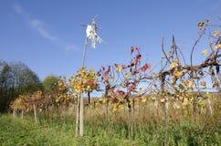 L'épouvantail dans le vignoble Photo libre de droits