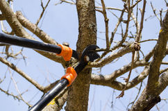 L'équilibre deux d'arbre fruitier manipulent le jardin de ressort de tondeuses Image libre de droits