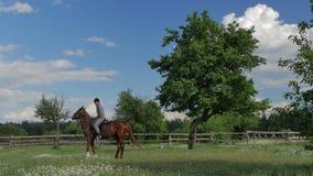 L'équitation d'homme sur le cheval sur le pré vert banque de vidéos